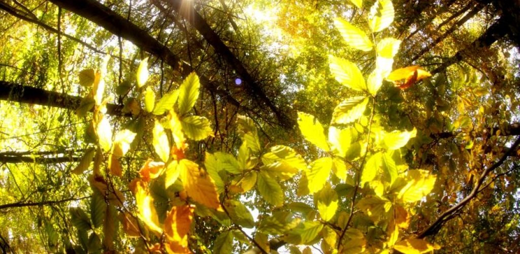 ela-chrapkiewicz-barwy-jesieni-1