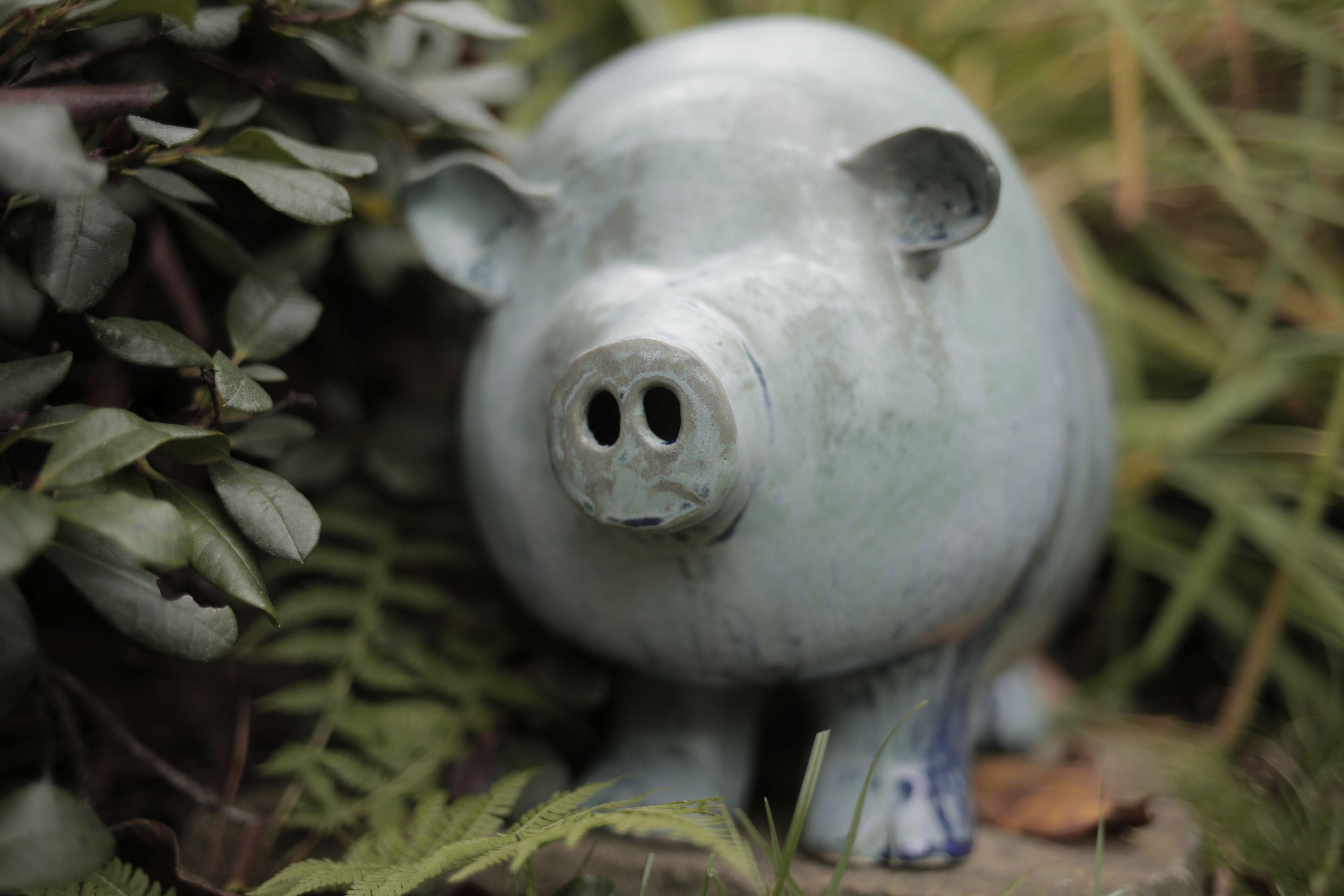 świniak-Agata